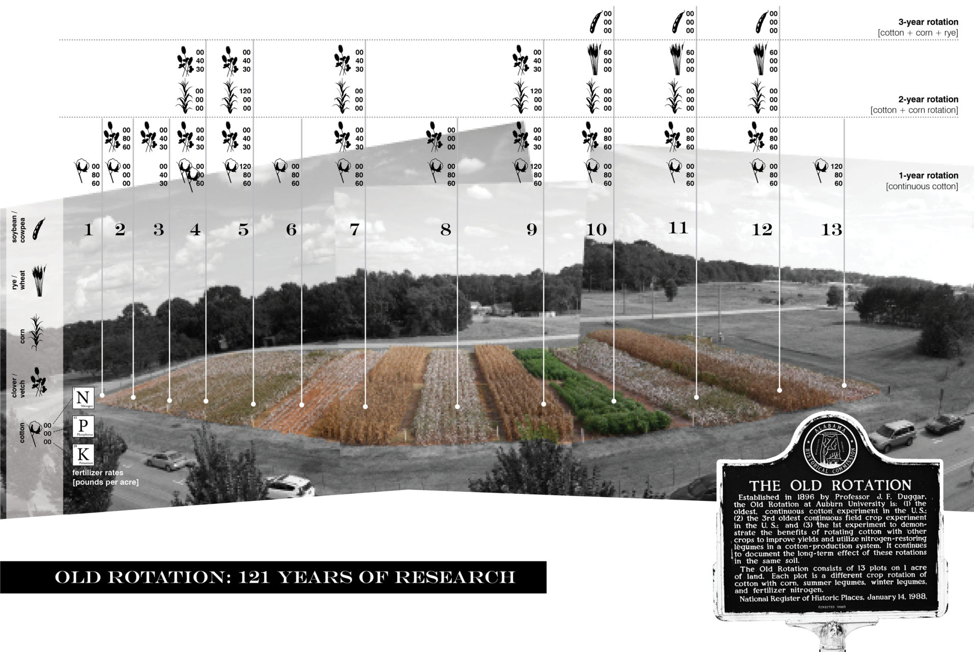 THE OLD ROTATION: Established in 1896 by Professor J.F. Duggar, Auburn's Old Rotation is the longest running continuous cotton experiment in the world. This cropping experiment proved long ago that rotating cotton crops with legumes better sustains soil fertility, which spread across Alabama and forever changed the growing practices of cotton.
